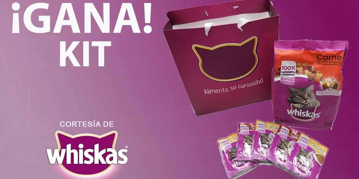 ¡Gana! kit para tu gato