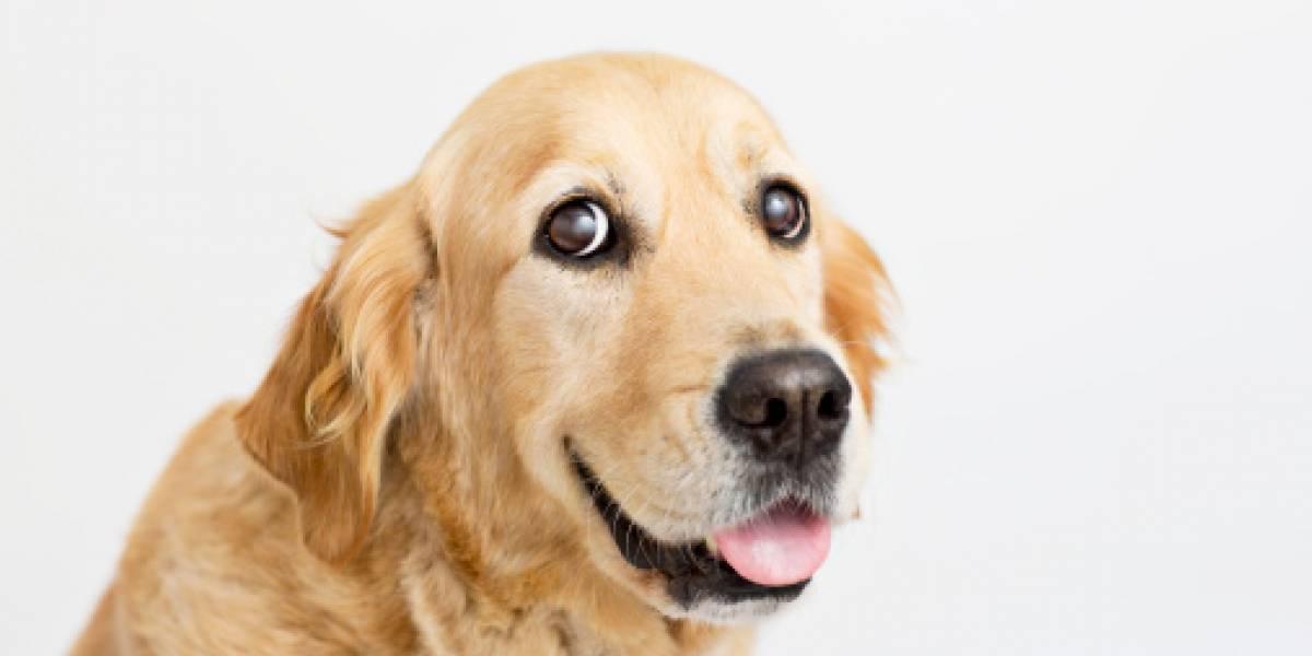 Policía organiza campeonato de agility para perros