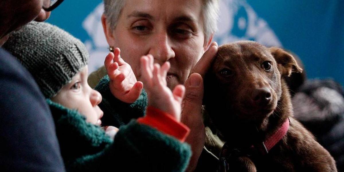 """Esterilización de mascotas divide a los veterinarios tras aprobación de Ley """"Cholito"""""""