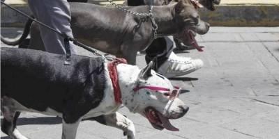 Pitbull mata a niña dentro de una vivienda en Coyoacán