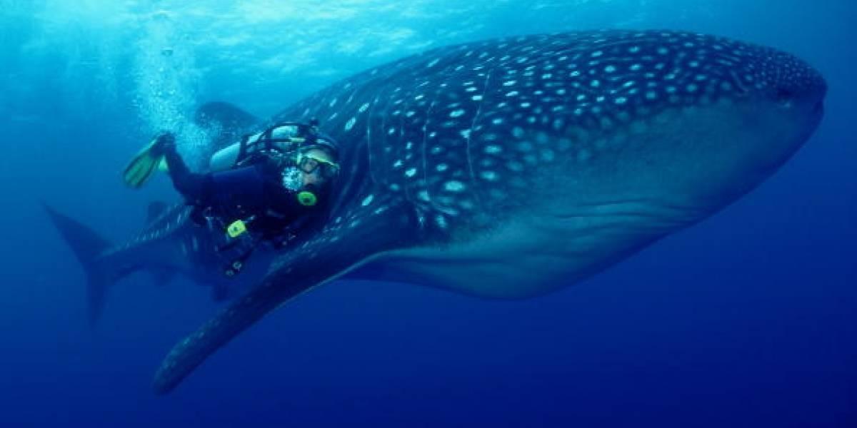 Graban a un raro y terrorífico tiburón en lo profundo del mar
