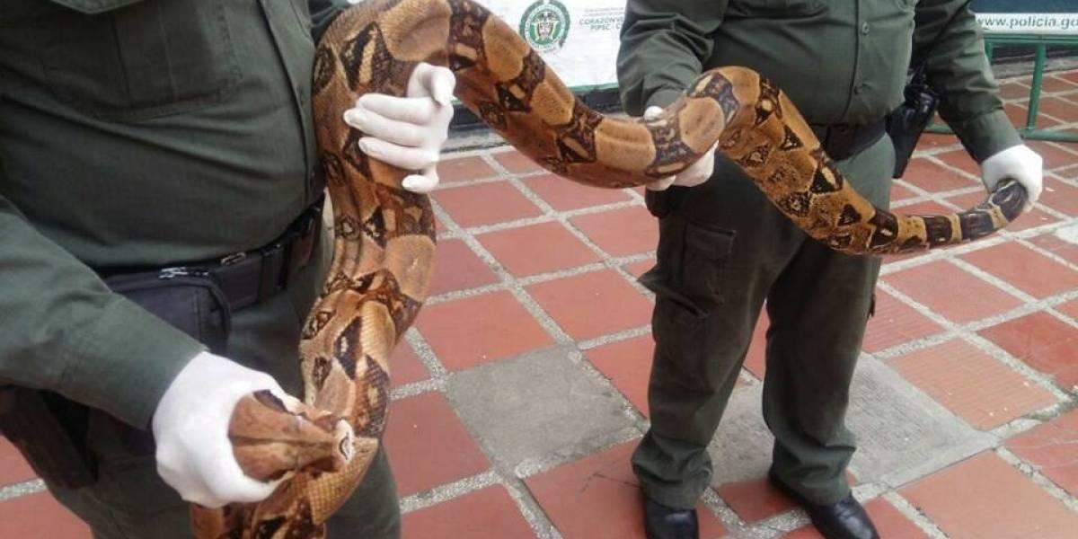 Atrapan serpiente de dos metros que deambulaba en sector residencial