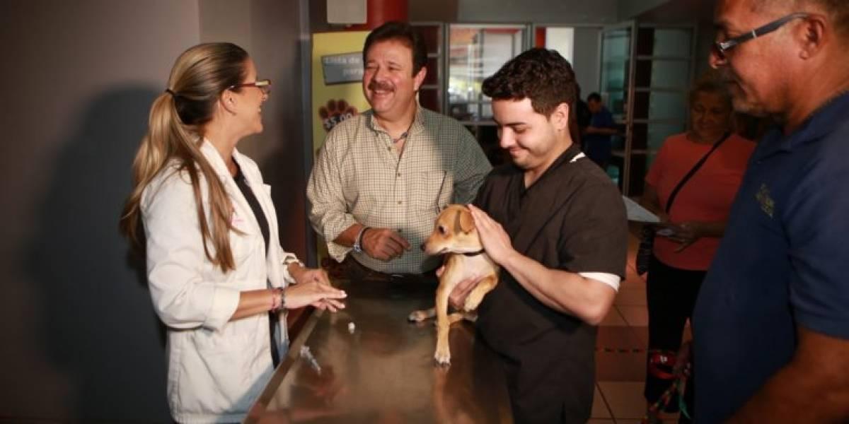 Realiza vacunación masiva para perros y gatos en Carolina