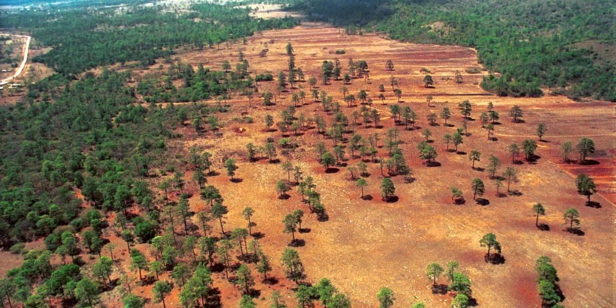 Pierde anualmente el país 225 veces el Bosque de Chapultepec por deforestación