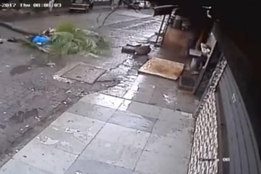 Famosa conductora muere tras caerle una palmera encima
