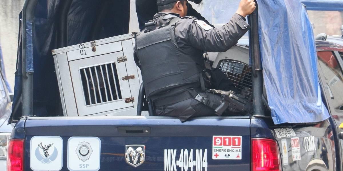 Liberan a mujer que cuidaba a pitbull que mató a niña en Coyoacán