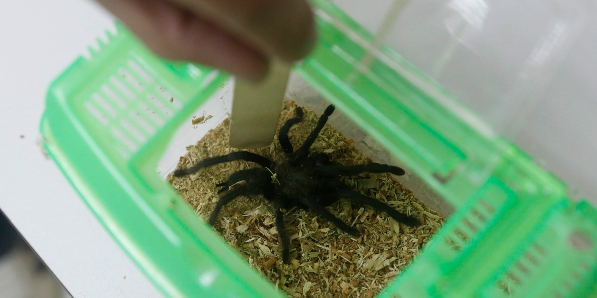 Por falta de suero, niño pudo haber muerto tras la picadura de una araña