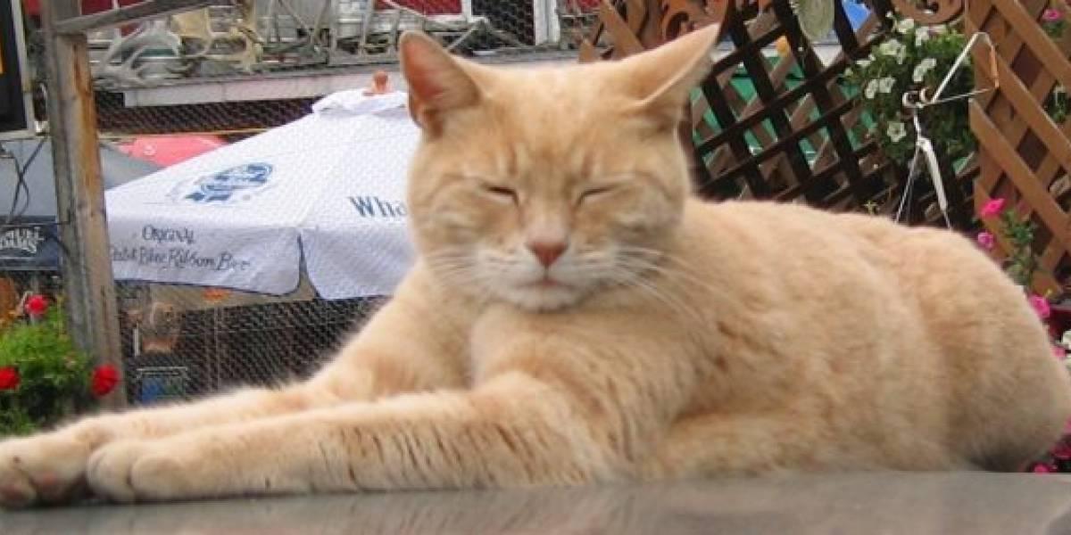 Tras 15 años en el cargo, muere el gato alcalde de Alaska