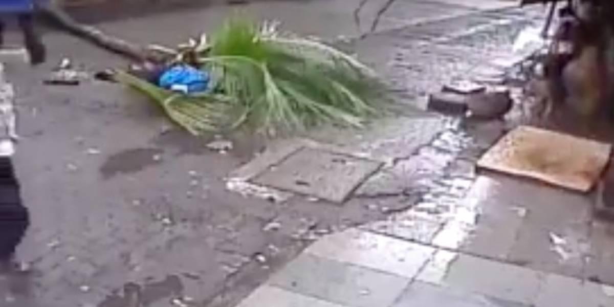 Insólito momento en el que muere una presentadora al caerle una palmera encima