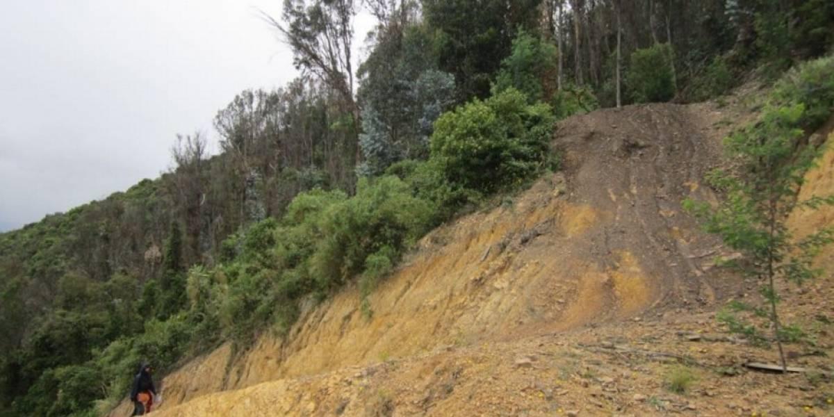 Contaminación, invasiones y afectación de la naturaleza, los tres males que sufren los cerros orientales
