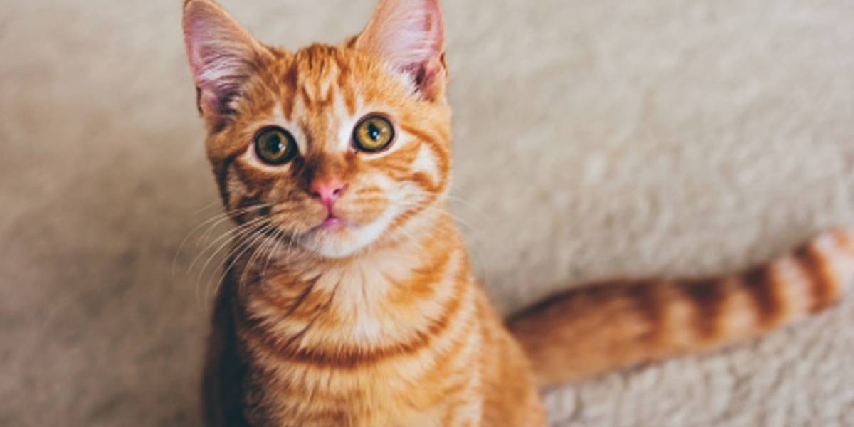 Muere una japonesa por un virus transmitido por una mordida de un gato