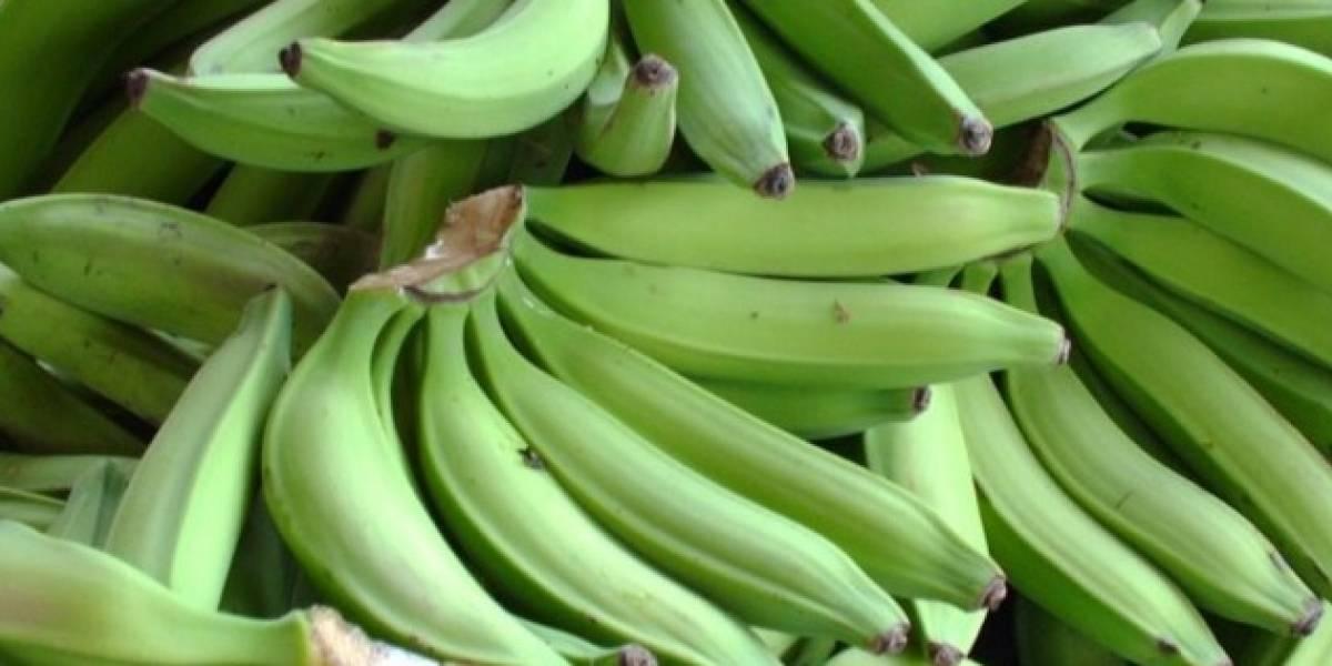 Roban plátanos, guineos y pilones de local en Dorado