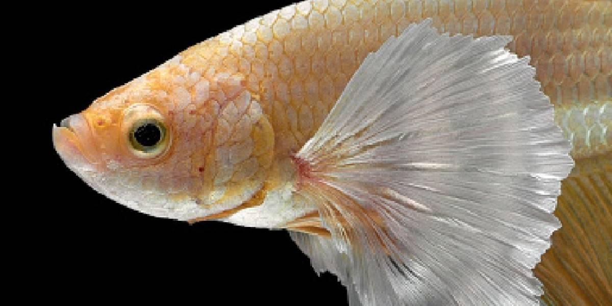 Condenan hombre por partir pez mascota