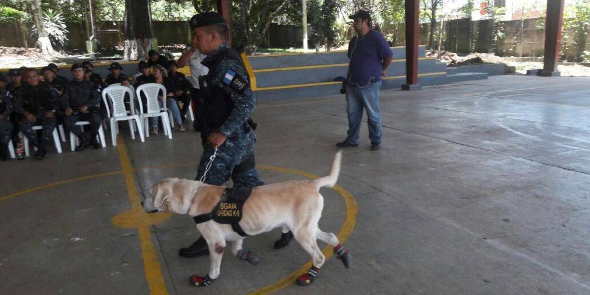Cuatro de los mejores agentes caninos antinarcóticos son jubilados