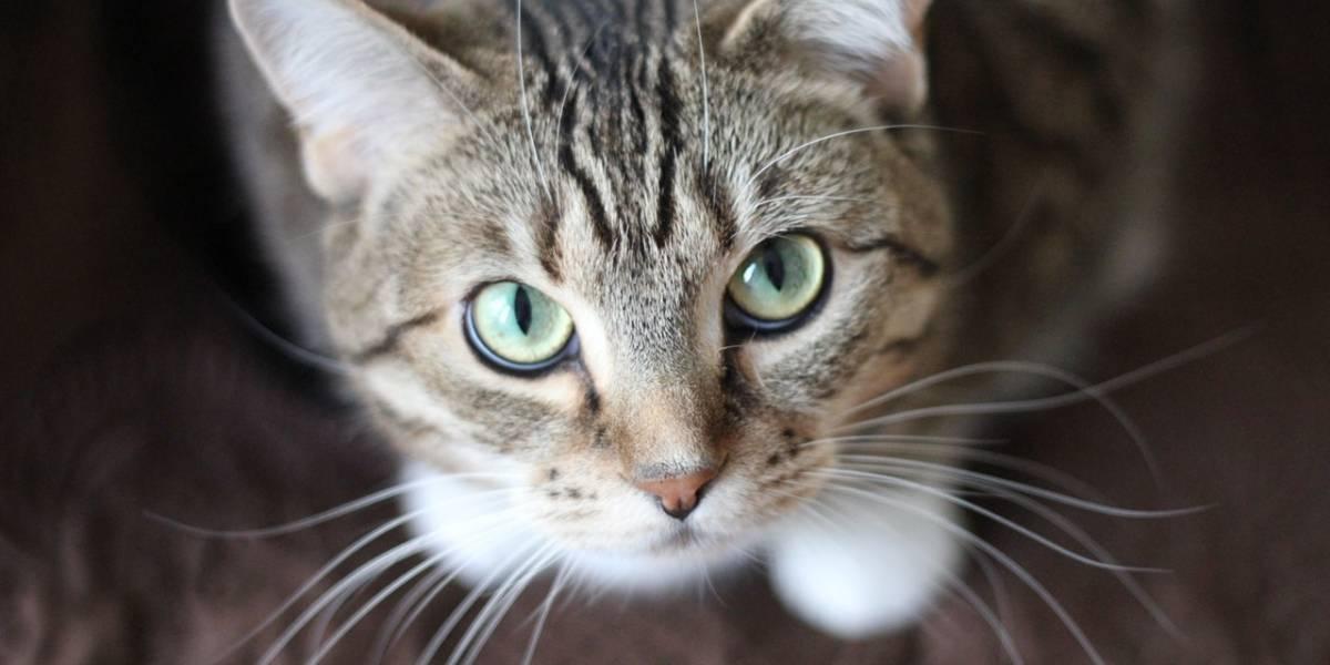 Saiba qual seria o perfil do seu gato de acordo com a astrologia