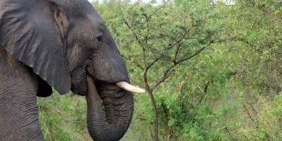 Fallece joven aplastado tras quererse tomar una selfie con un elefante