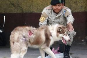 Rescatan a perro en la zona 5