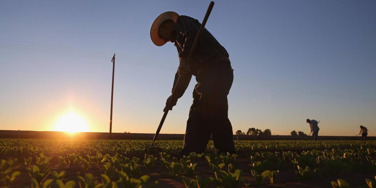 Una visa para trabajadores agrícolas en EU es 'inviable'