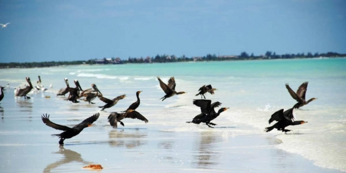 Autoridades de Quintana Roo implementan operativo para garantizar servicios en Holbox