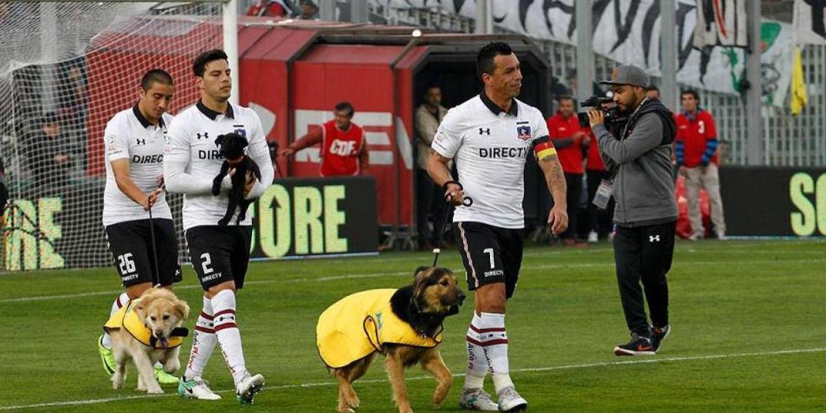 Jugadores de Colo Colo promueven la adopción de perros