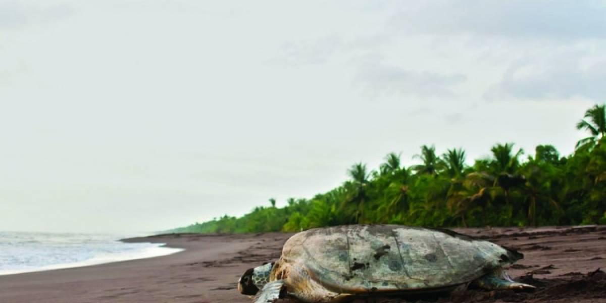 Conoce el Tortuguero, el destino exótico de Costa Rica