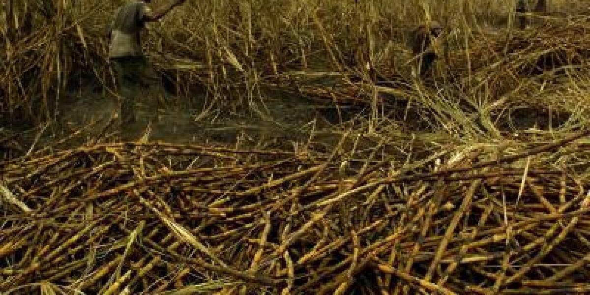 Denuncian que presuntos indígenas quemaron 100 hectáreas de caña