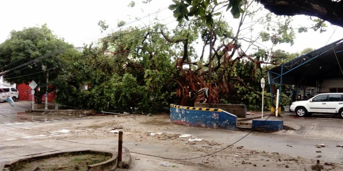 Fuerte tormenta deja árboles caídos y emergencias en Barranquilla