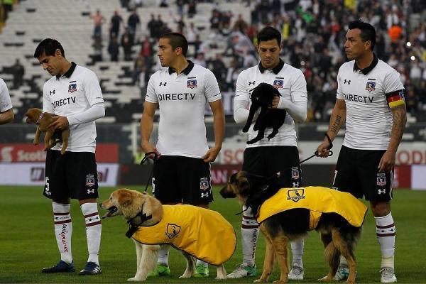 Colo Colo y sus perros / imagen: Photosport