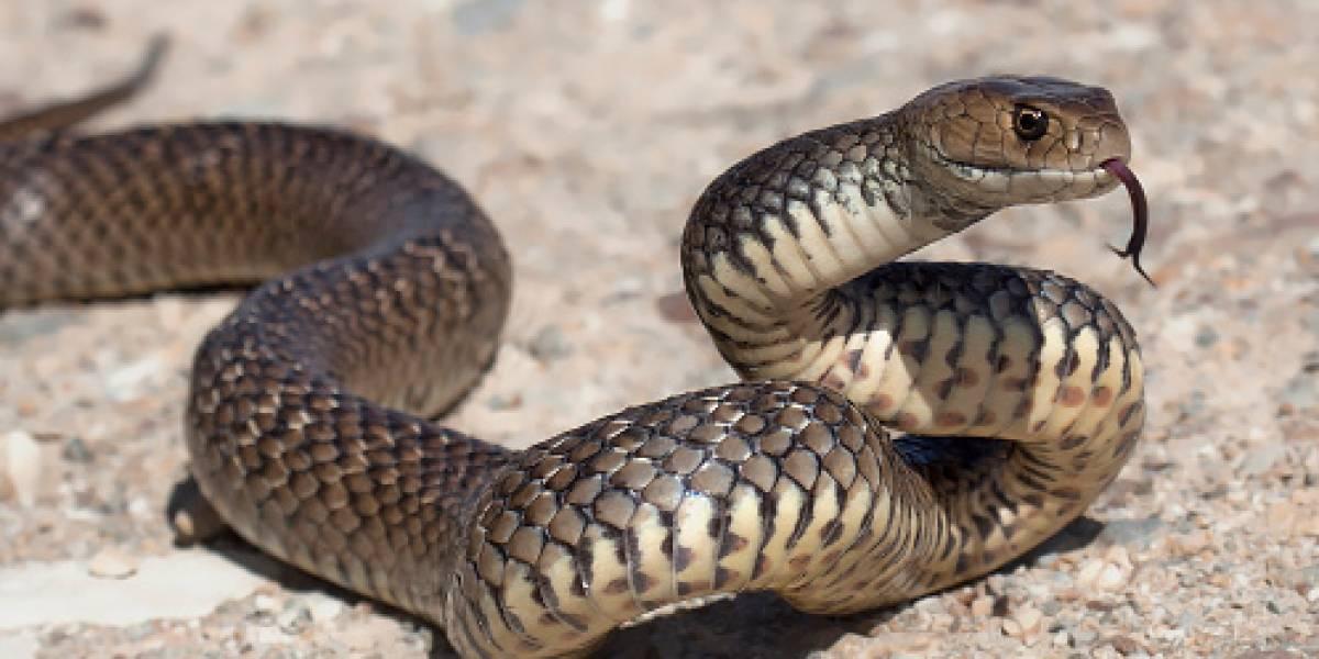 Un niño chino sobrevive 24 días alimentándose de serpientes