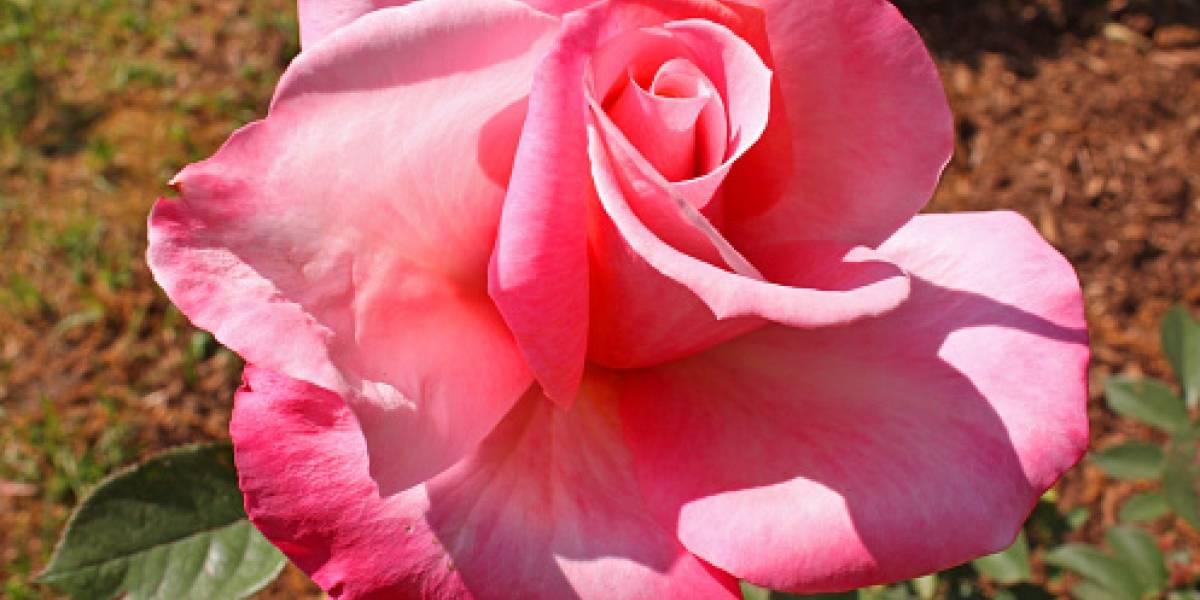 Reconstruyen antiguas angiospermas que revelan como eran las primeras flores
