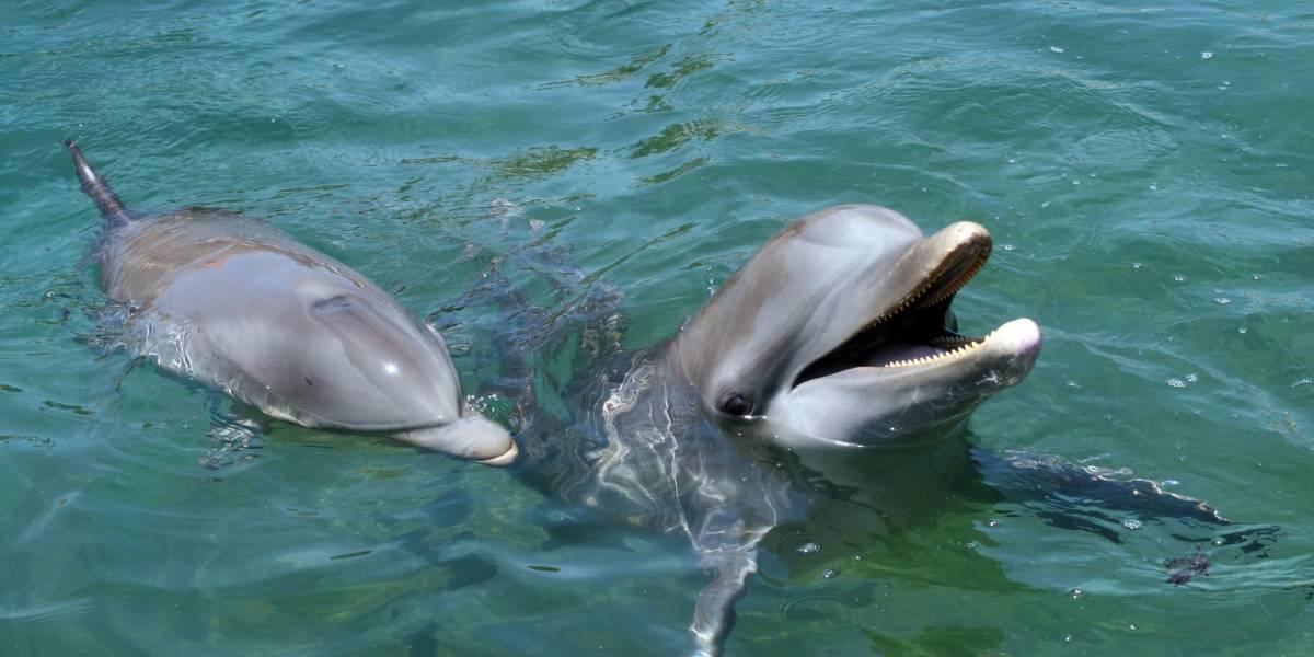 'Ahogan' al último delfinario de la CDMX