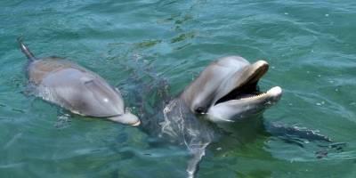 ALDF prohíbe uso de delfines en espectáculos