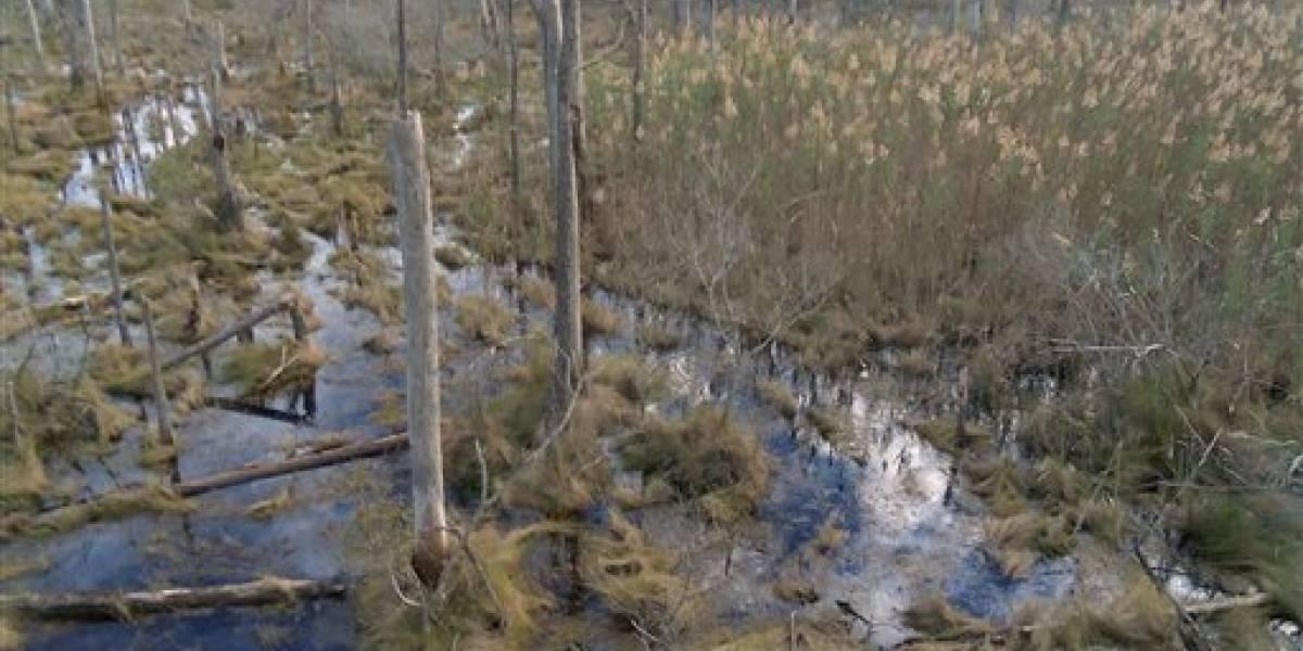Cambio climático: crece el mar y mueren los árboles