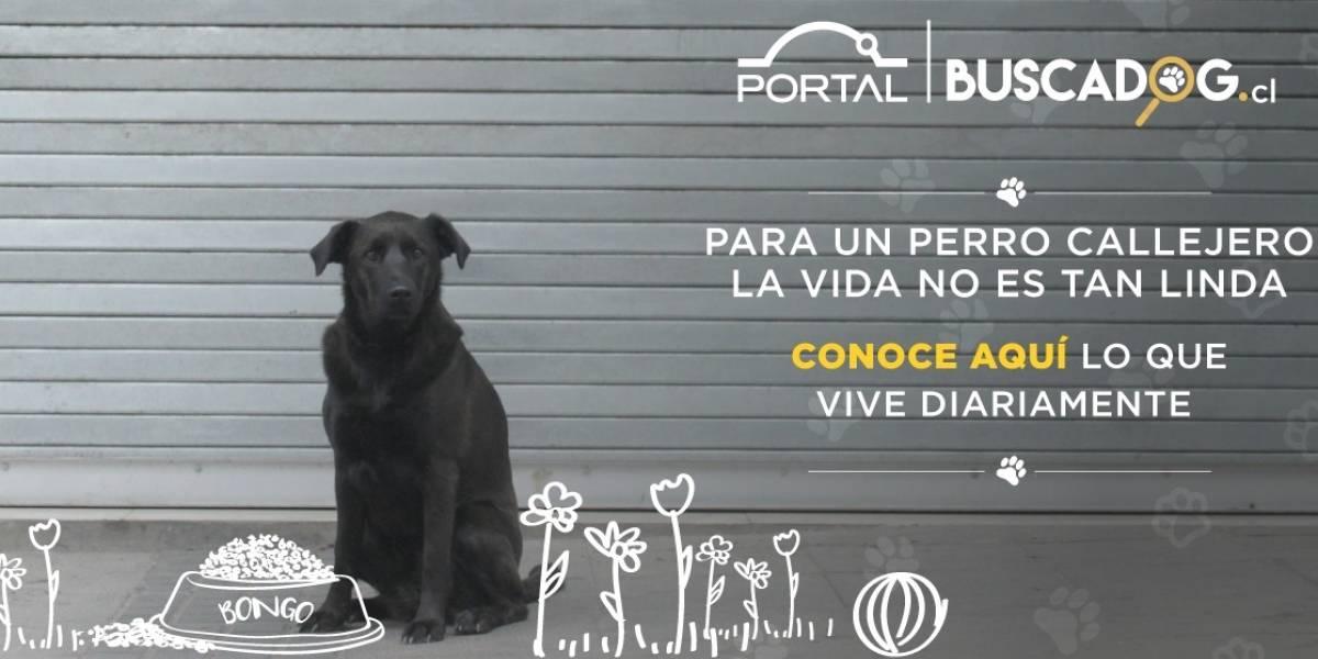 Celebramos el día del perro callejero con una increíble noticia: tenemos Ley de Tenencia Responsable