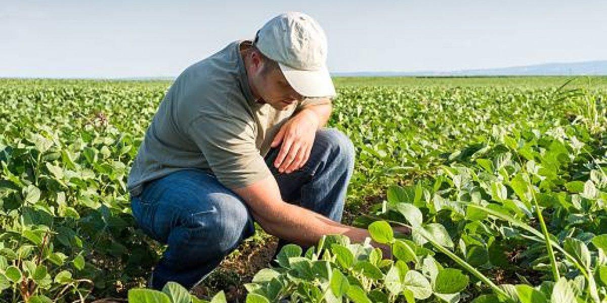 Alertan que cambios en ayudas federales afectarían la agricultura
