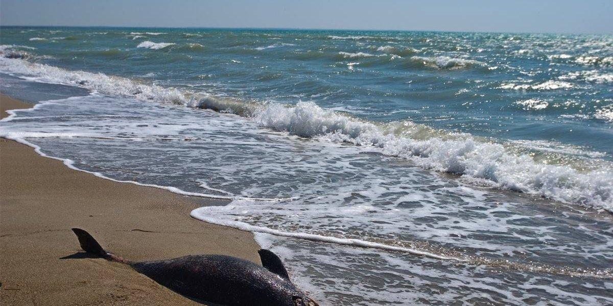 Este año, han muerto atrapados 119 delfines en costas de Rumania