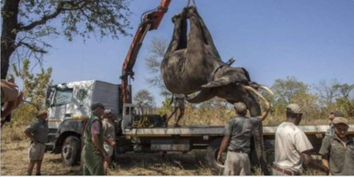 """Completan una """"histórica"""" relocalización de 520 elefantes en Malaui"""