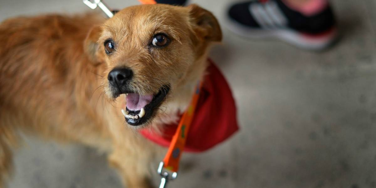 Censura animal: multarán a dueños de perros que ladren y pajaritos que canten en localidad italiana