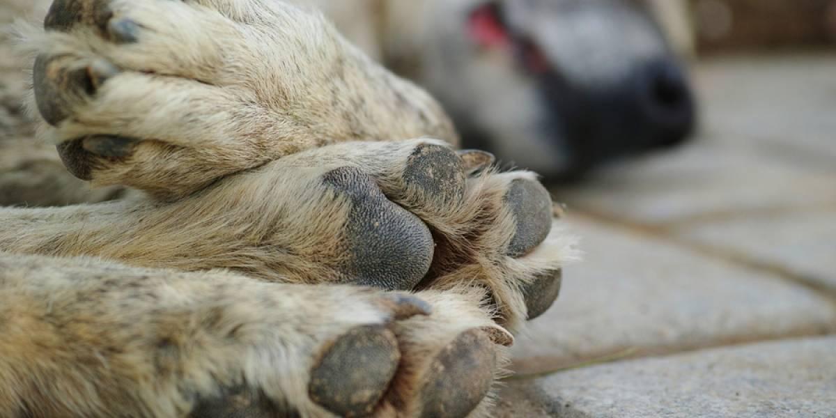 VIDEO. Hombre se apiada de perro callejero y su acción se ha vuelto viral