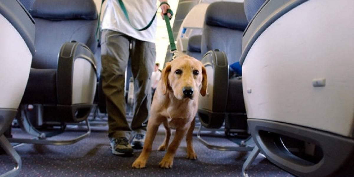 """Sufrió """"más que un pasajero humano"""": Perro demanda a aerolínea por retraso en su vuelo"""