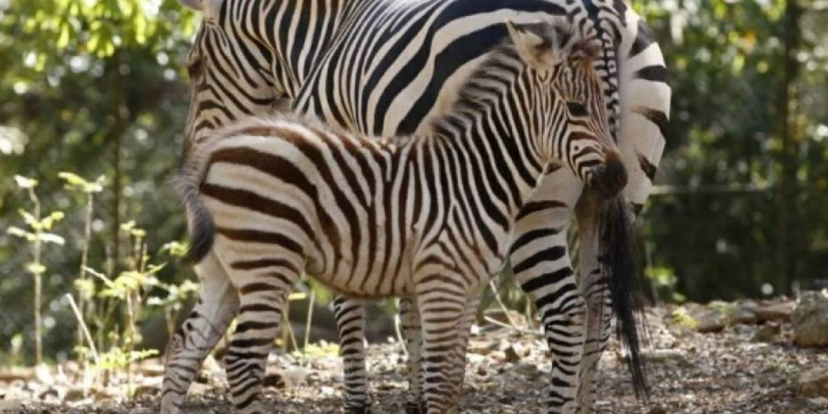 Zoológico de Mayagüez estará cerrado mañana sábado