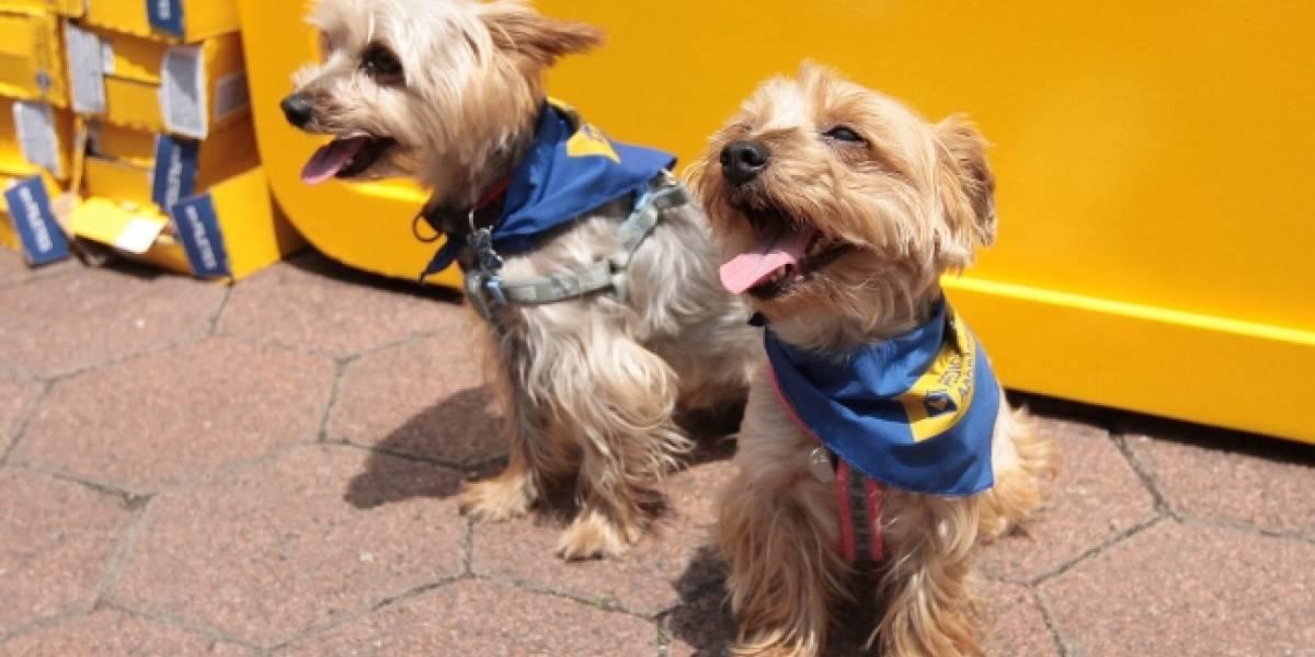 Autoridades piden a la población incluir a mascotas en el plan familiar de Protección Civil