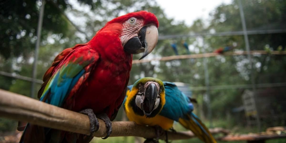 Horrible maltrato: Encuentran más de 1.000 animales muertos y cientos