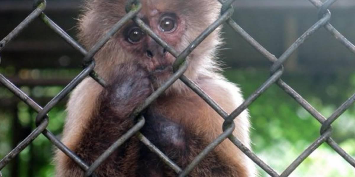 PETA a favor del cierre del zoológico de Mayagüez