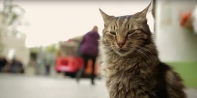 Documentário turco sobre gatos revela o lado mais primitivo e adorável dos felinos que vivem em Istambul
