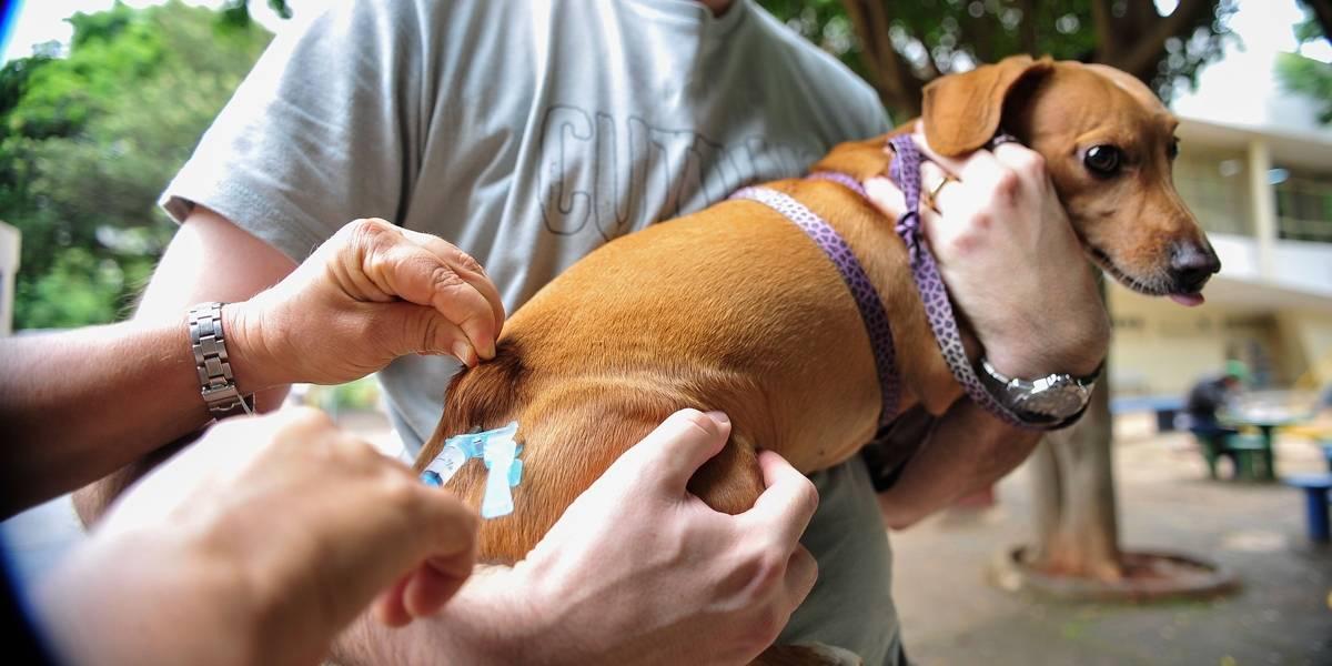 Raiva: postos seguem com vacinação até dia 29