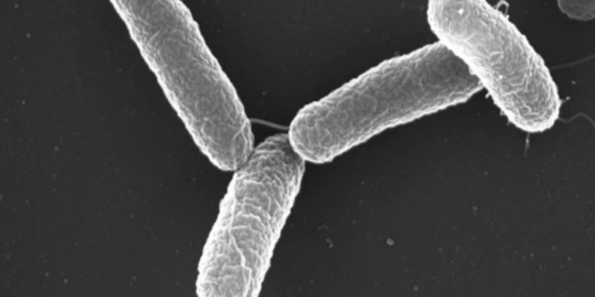 Vinculan brote de salmonelosis en EEUU