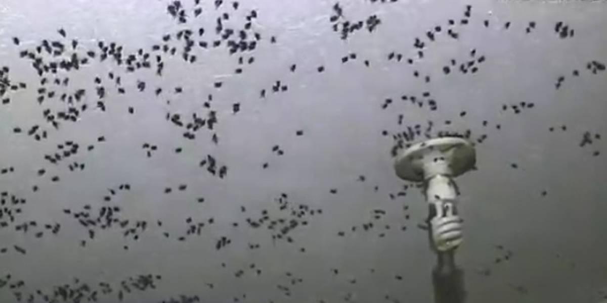Barrio en el sur de la capital se encuentra plagado de moscas