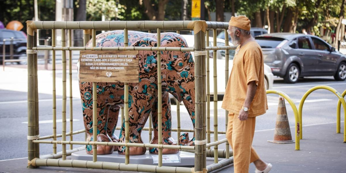 Esculturas de elefantes amanhecem em jaulas em São Paulo
