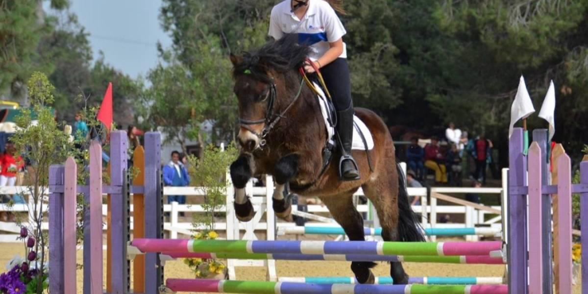 Movicenter invita al disfrute de (otros) caballos